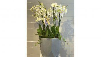 White Orchid Whit Vases